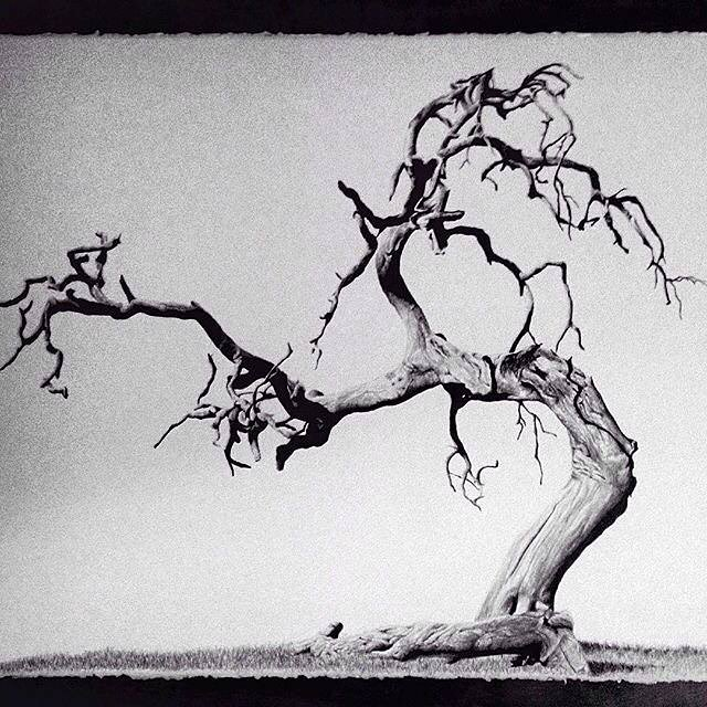 graphite tree drawing
