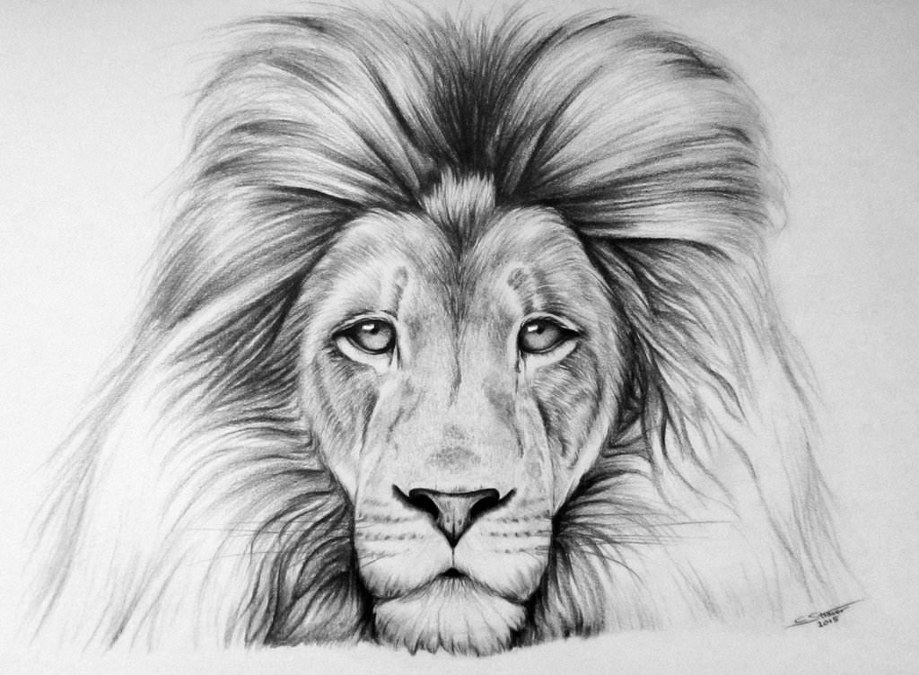 19 Lion Drawing Art Ideas Sketches  Design Trends  Premium
