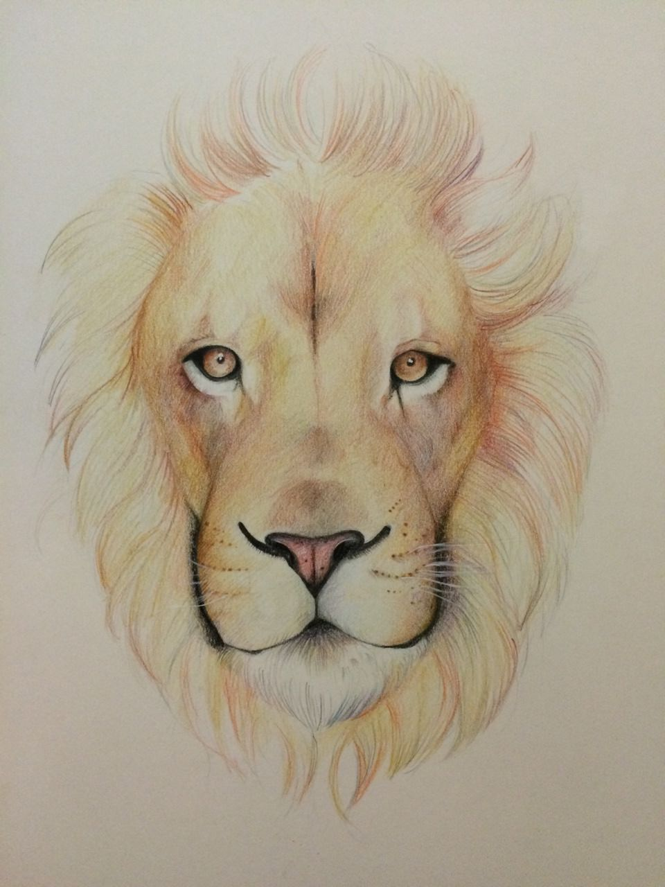 Brown Shaded Lion