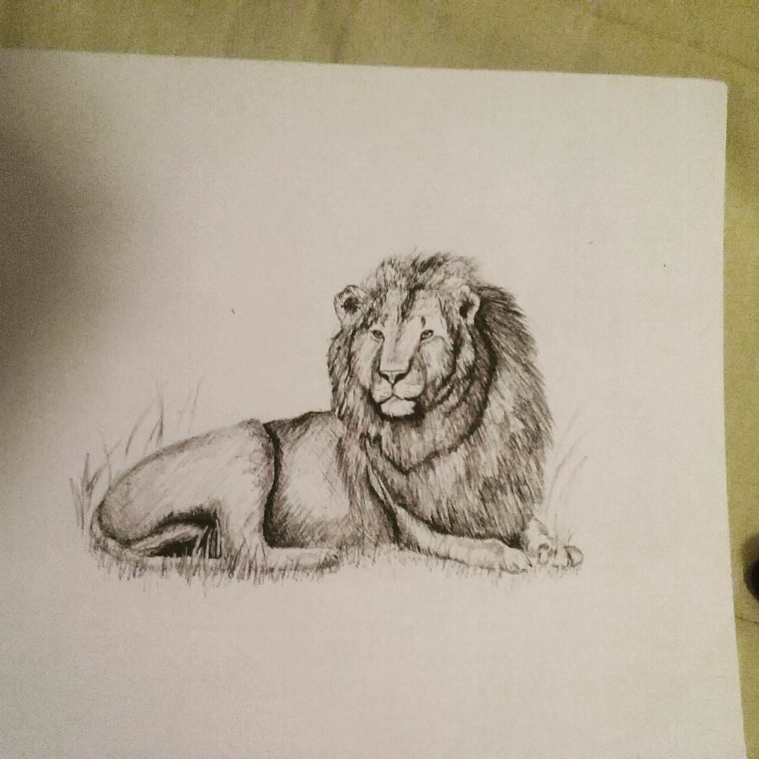 19 lion drawing art ideas sketches design trends