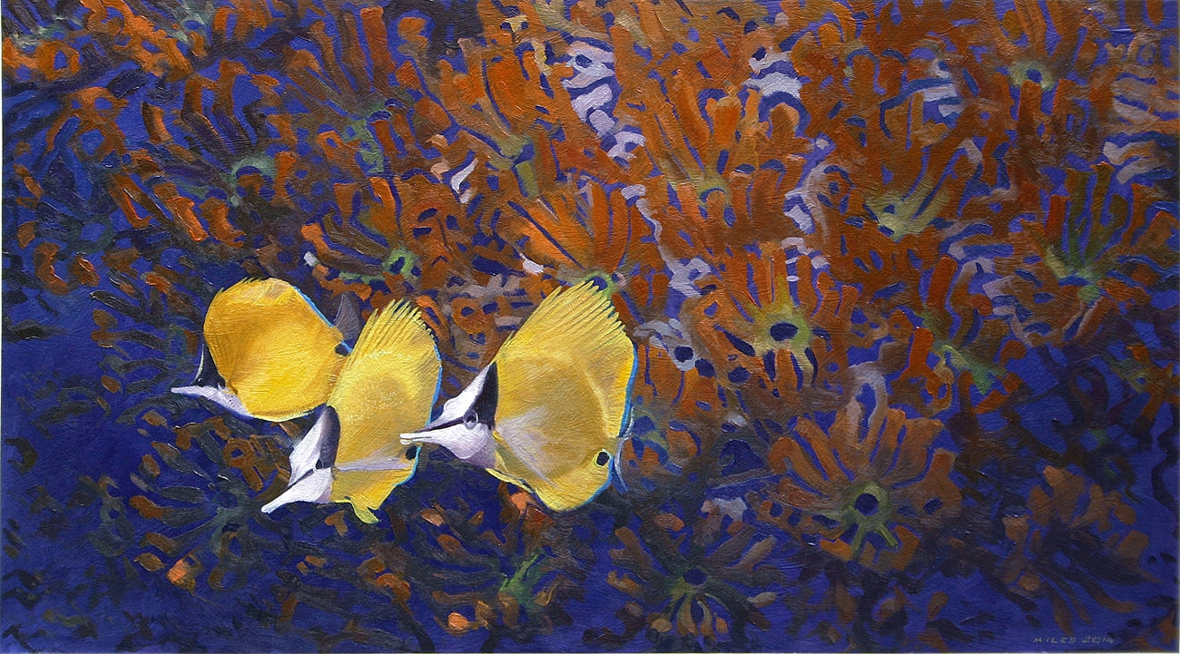 Long Nosed Butterfly Fishes