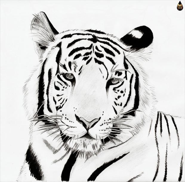 White Tiger Clipart