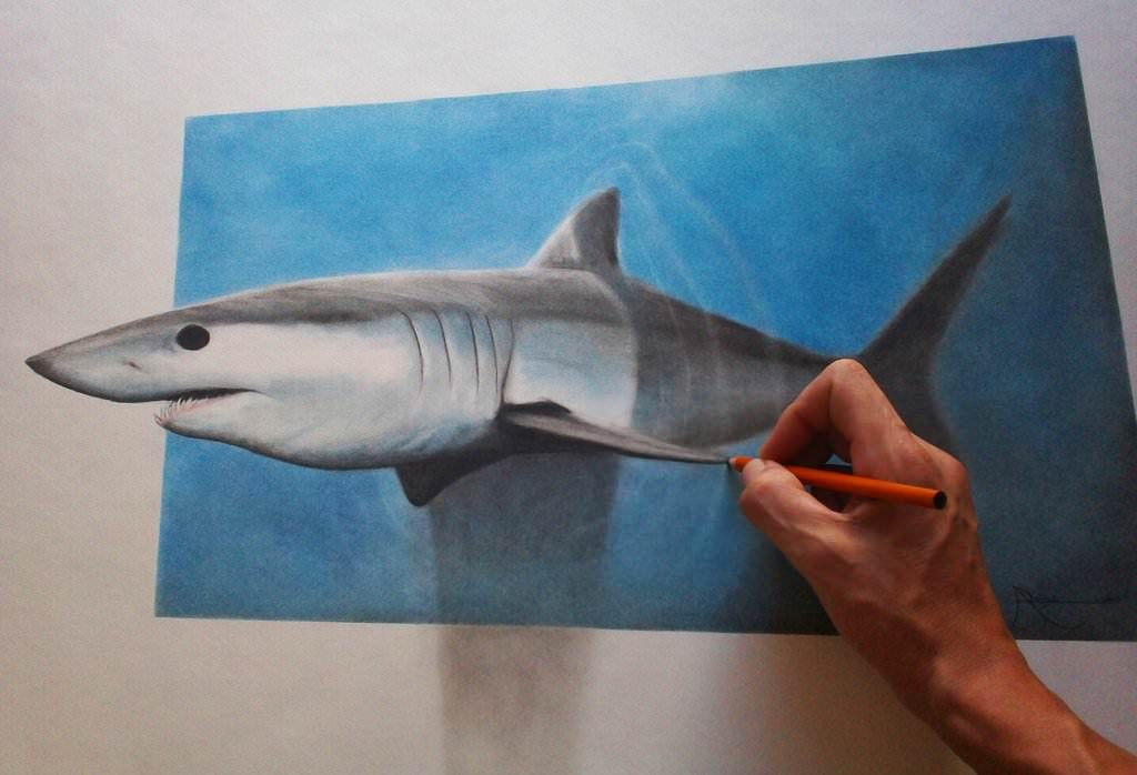 shark pastel pencil drawing
