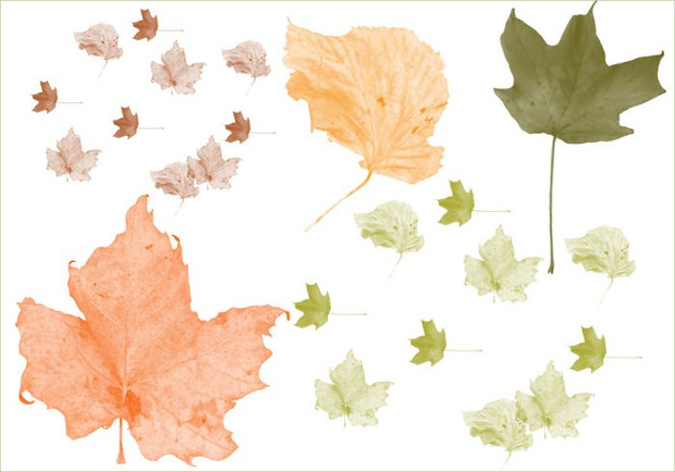 Light Coloured Fall Leaves brushes