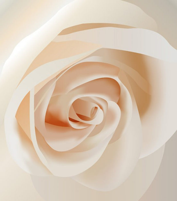 Close View Rose Vector