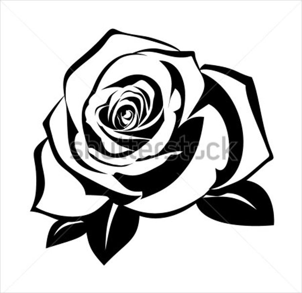 Black and white Rose Vector