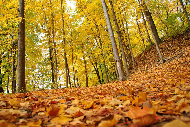 amazing fall wallpaper