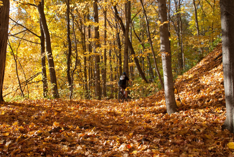 Nature Fall Wallpaper