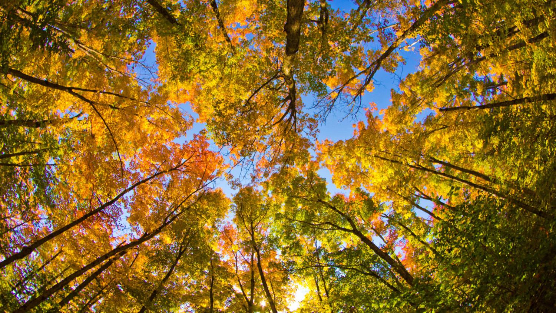 Spectacular Fall Wallpaper