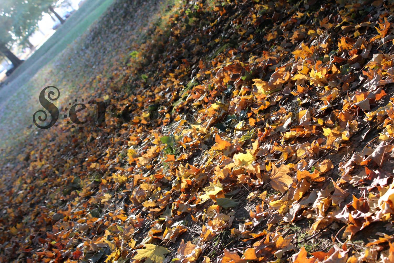 forest fall wallpaper