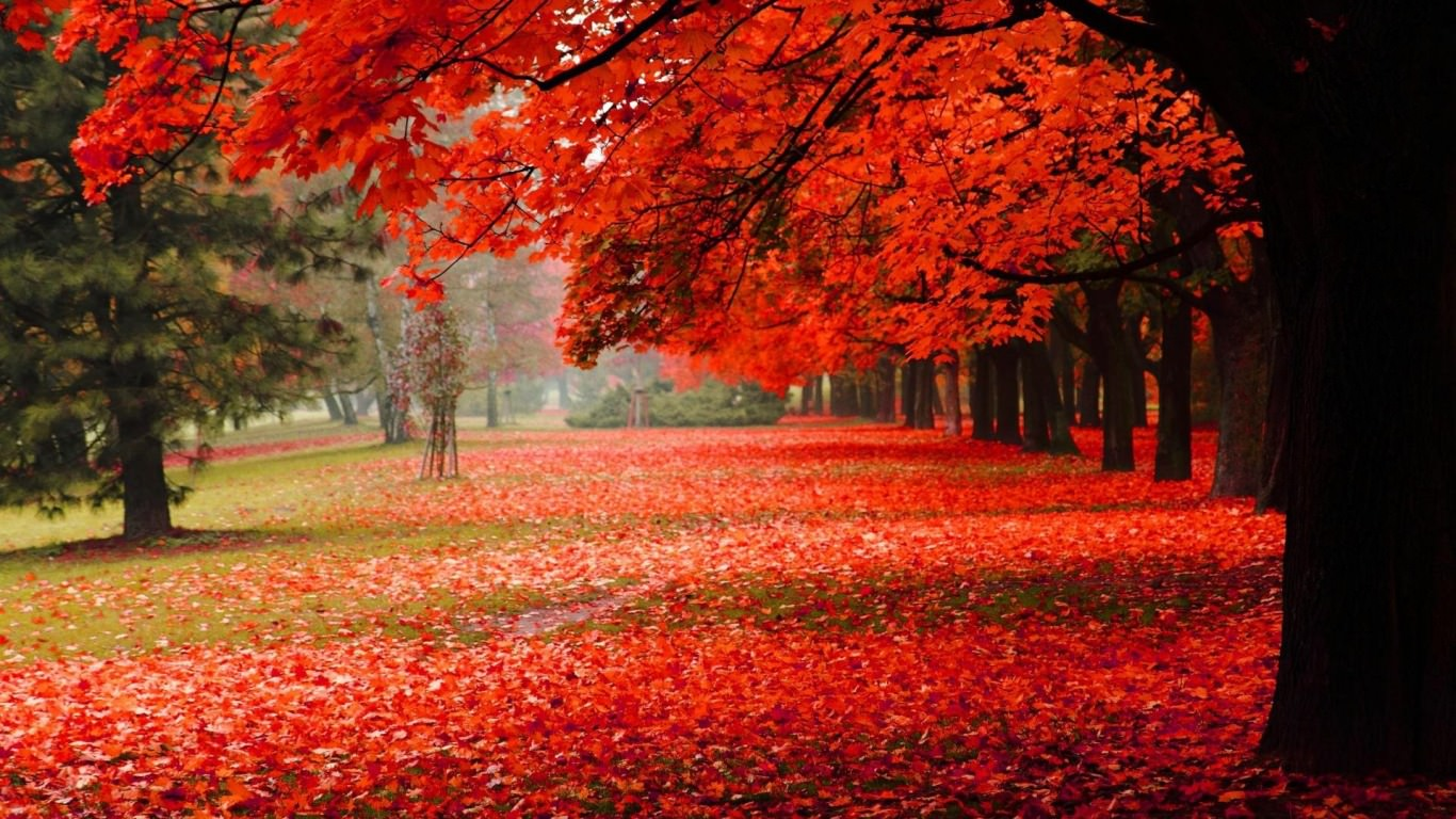 red fall wallpaper - photo #6