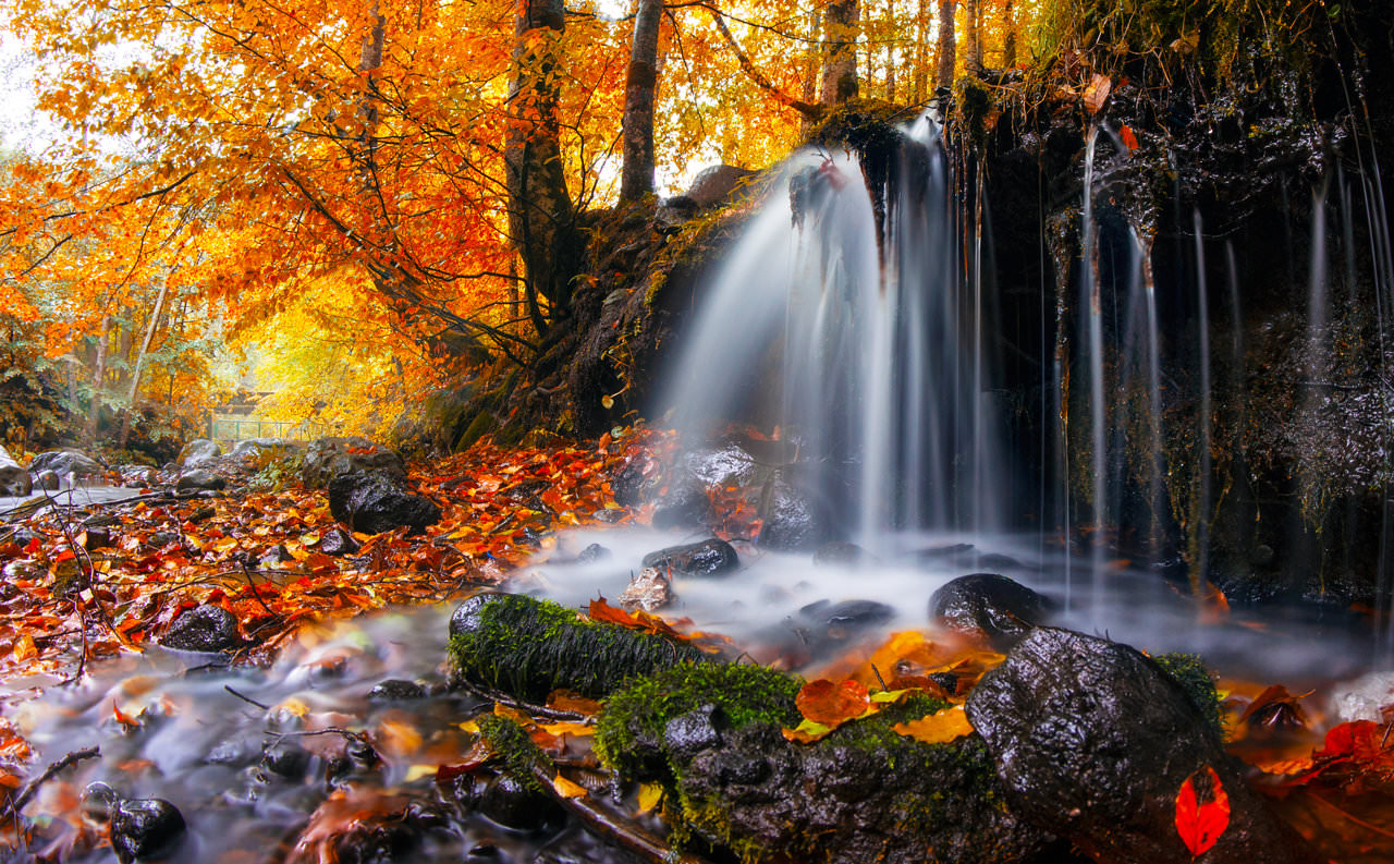 24+ Fall Wallpapers, Backgrounds, Images, Pictures ...