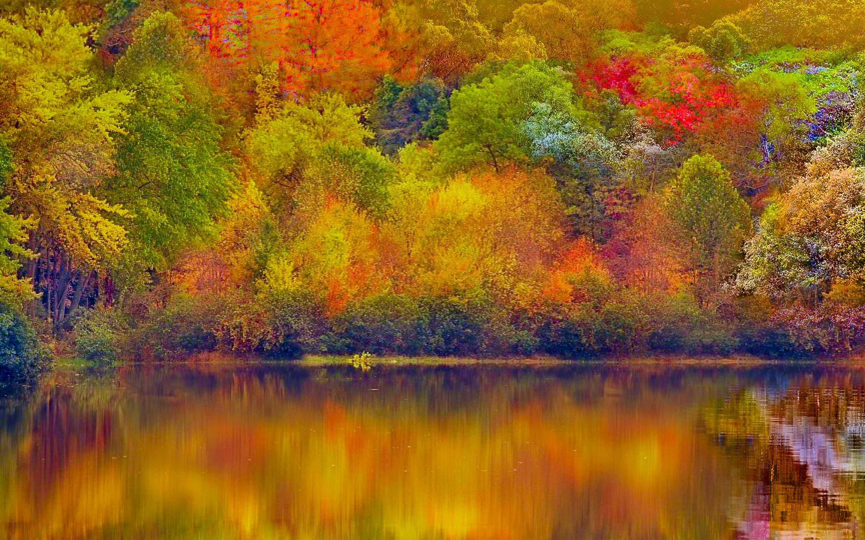 Colourful Autumn Fall Wallpaper