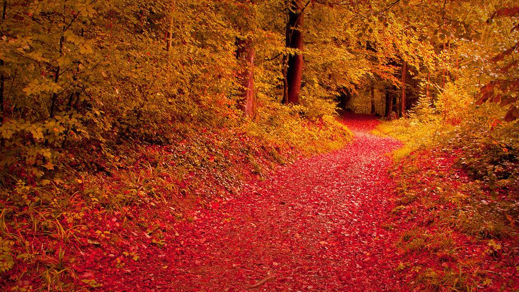 pretty leaves fall wallpaper