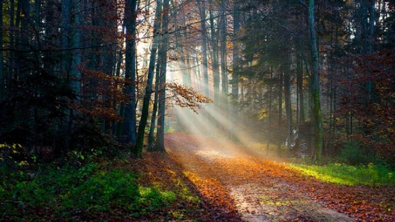 amazing forest light fall wallpaper