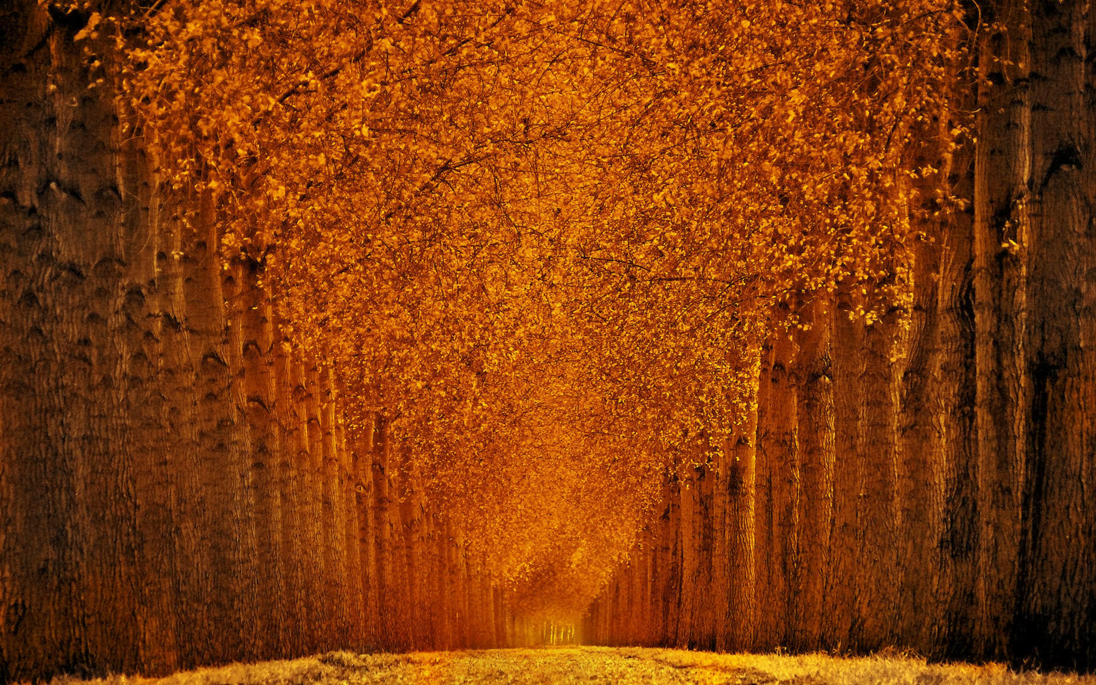 Orange Tree Leaf Fall Wallpaper