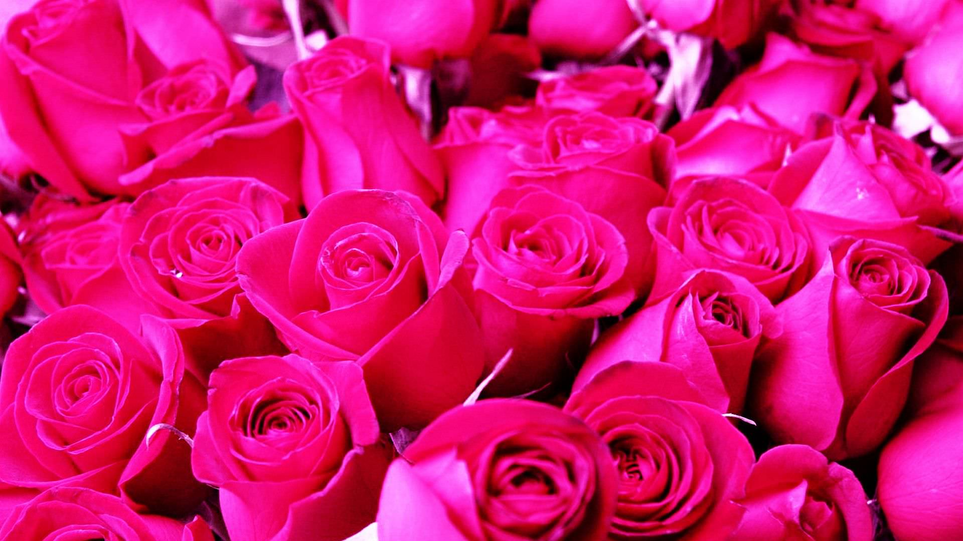 29 roses backgrounds wallpapers images pictures - Pretty roses wallpaper ...