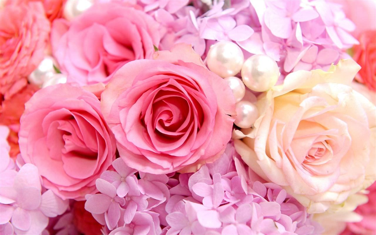 29 roses backgrounds wallpapers images pictures design trends beautiful roses background wallpaper voltagebd Image collections