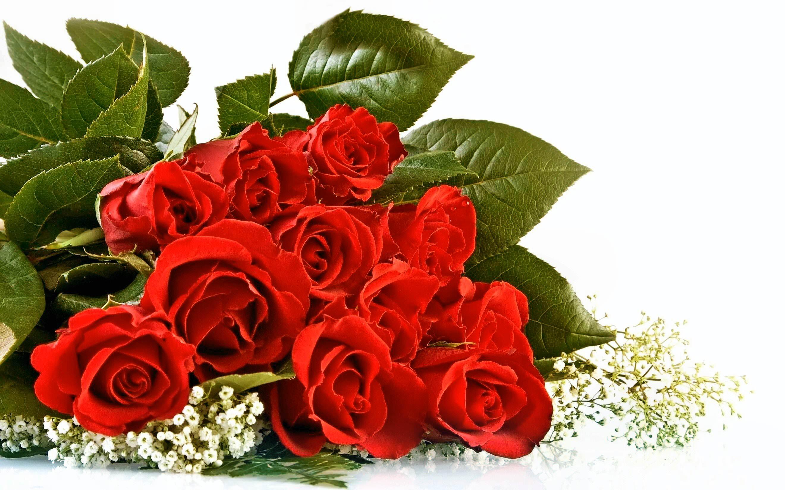 Valentine Red Rose Bouquet Background