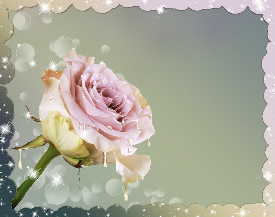 rose flower graphic design for greeting backgrounds