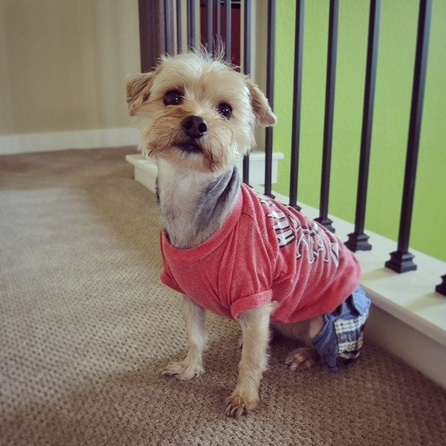 cute dog outfits
