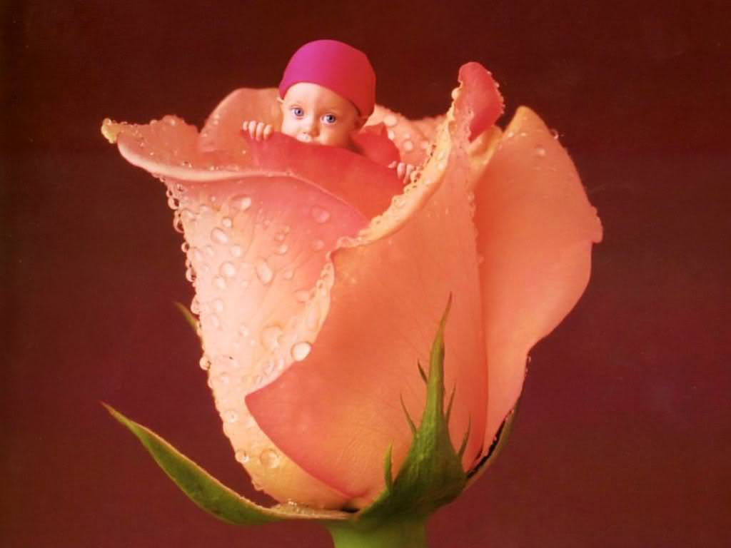 Little Dool with Rose Bud Wallpaper