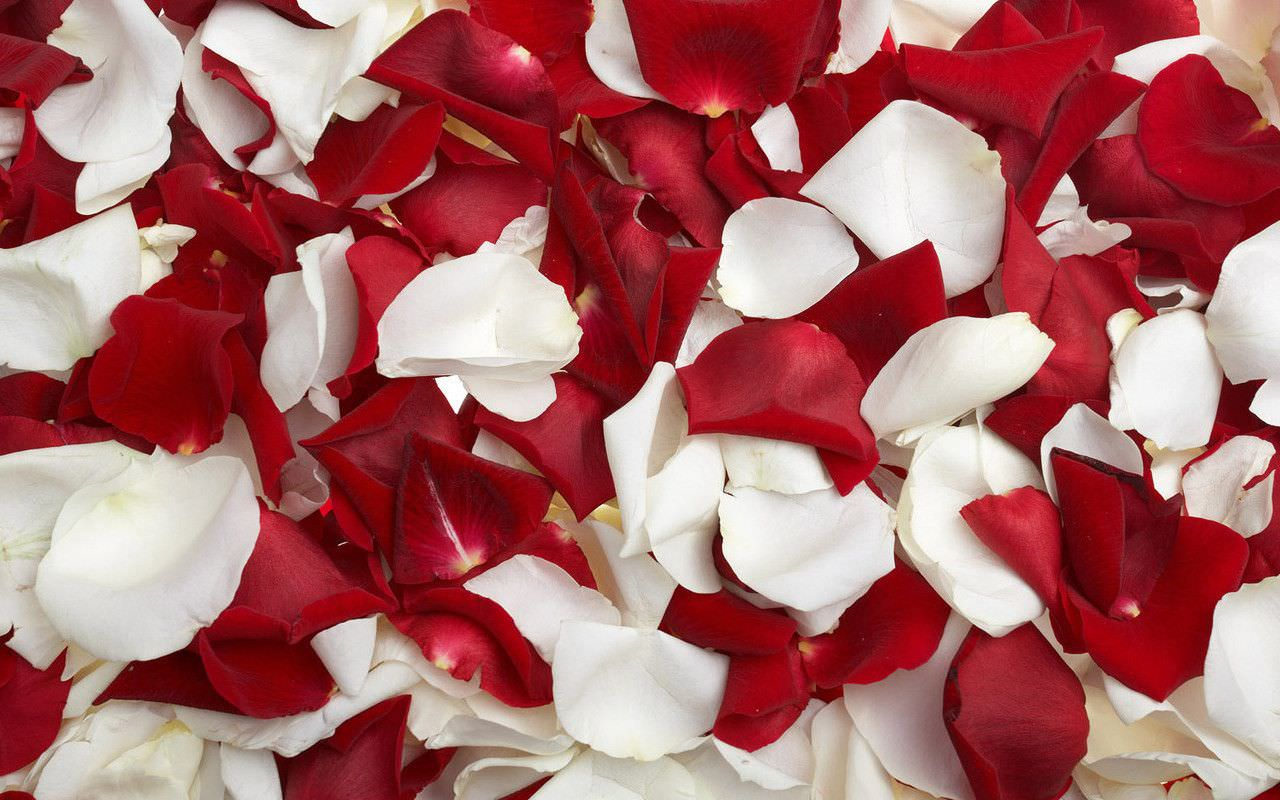 White and Red Rose Petals Background