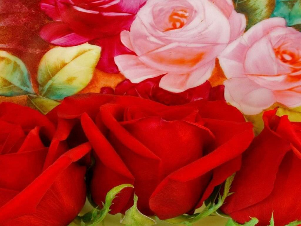 art of red and pink roses background