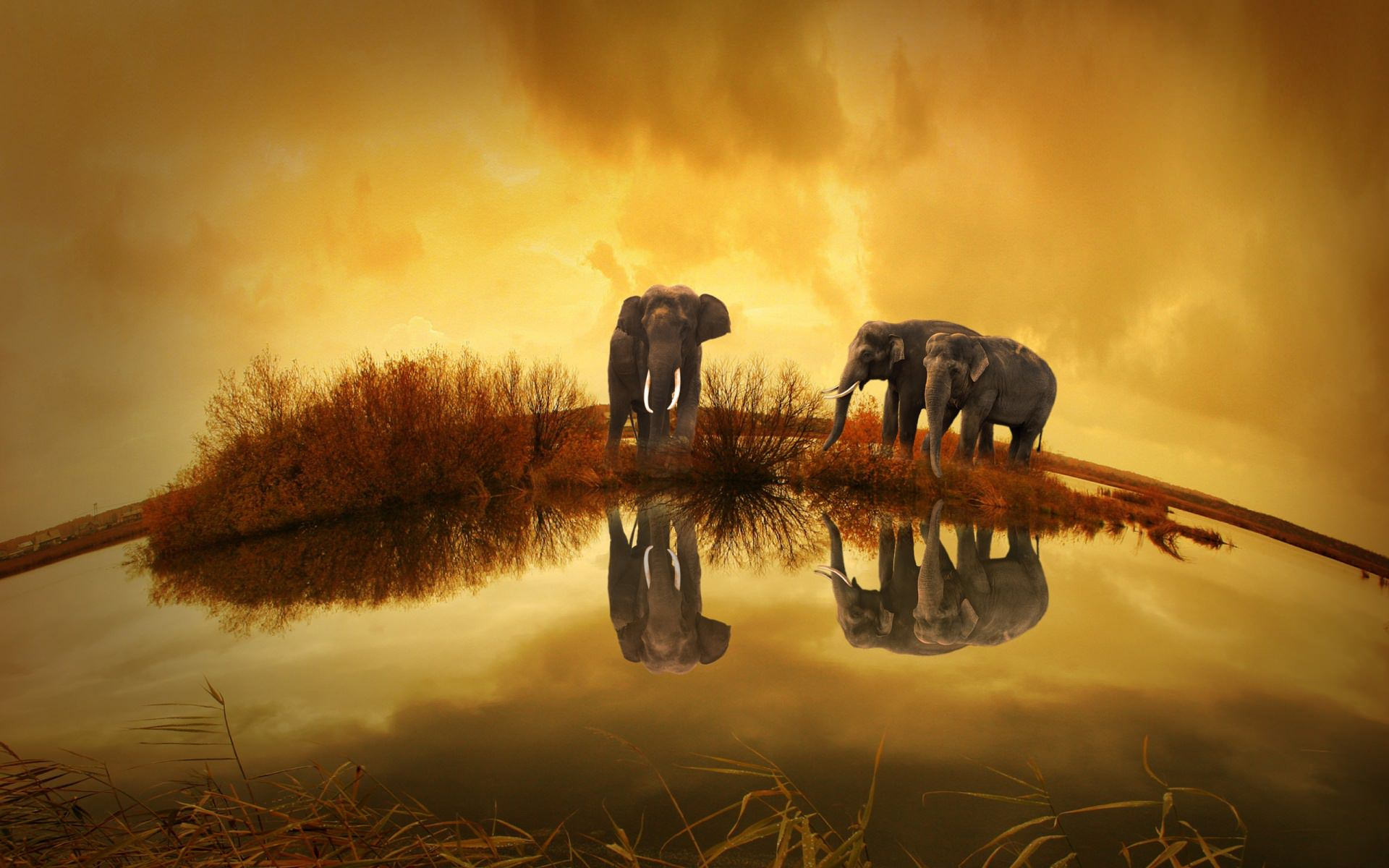 Thailand Elephants View Background