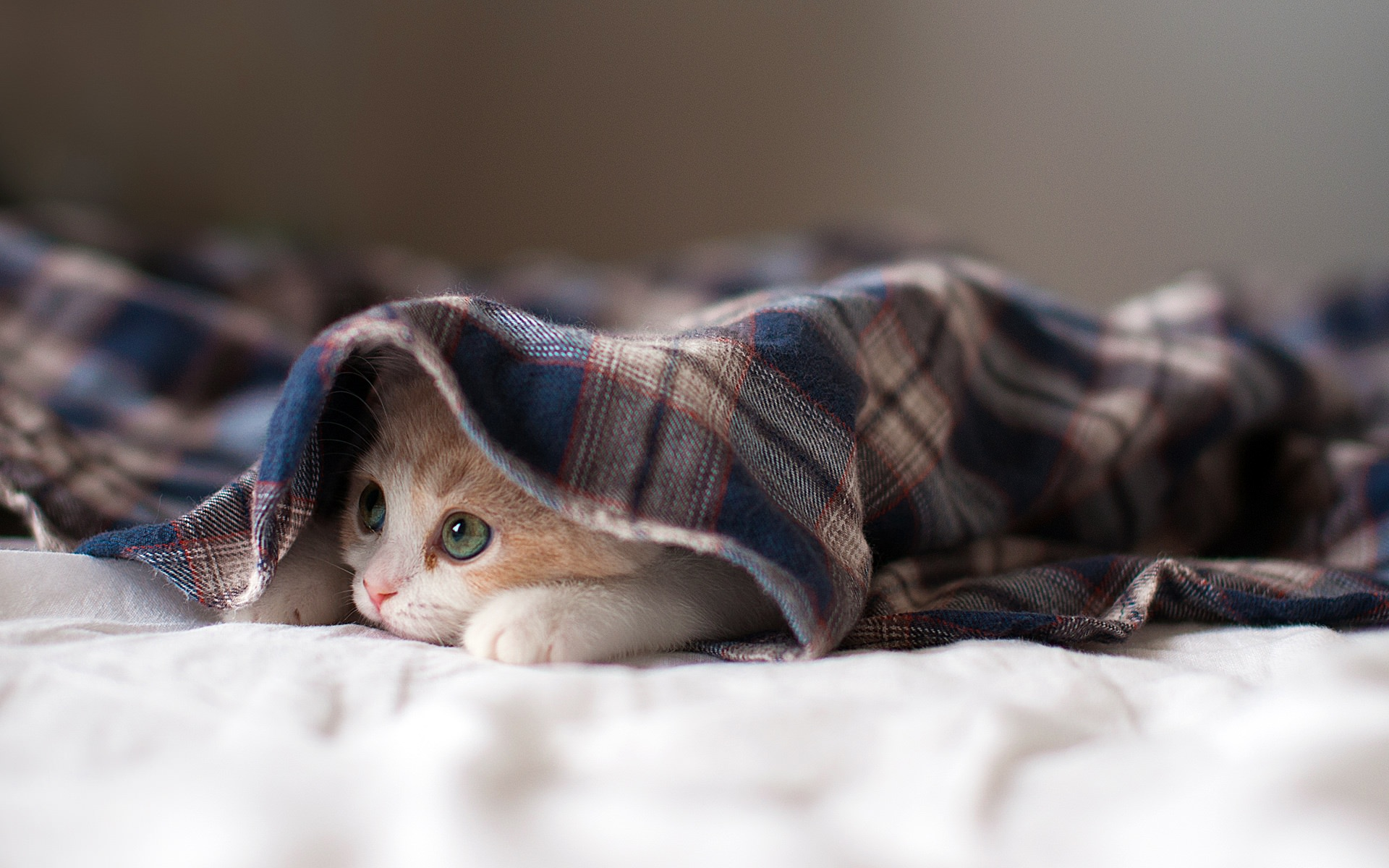 Sleepy Cute Kitten Wallpaper