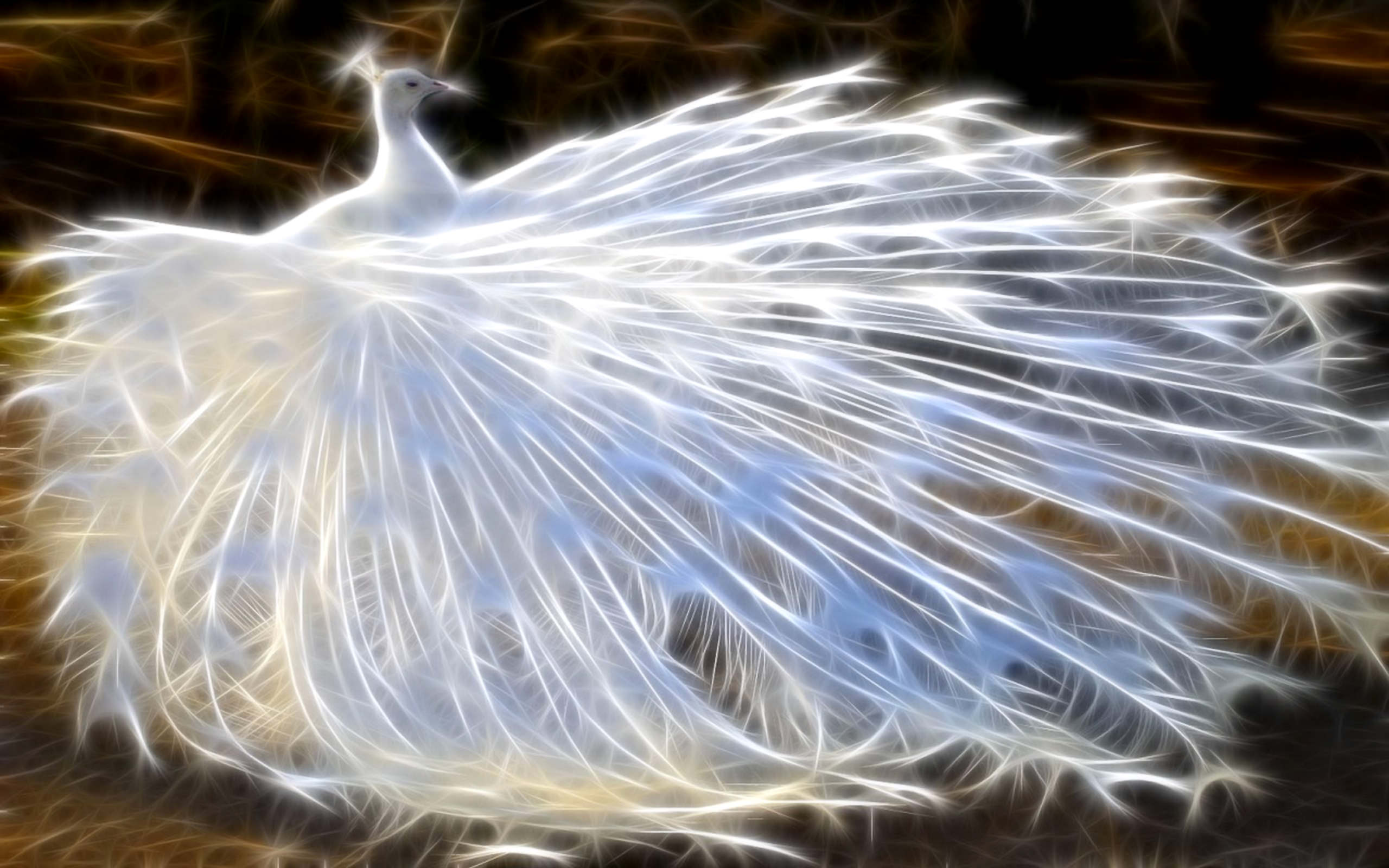 Beautiful White Peacock Background