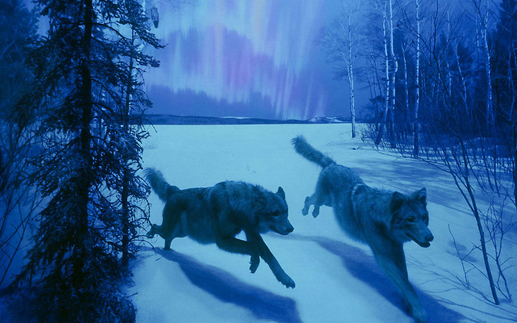 Wolf Nature Animal Wildlife Background