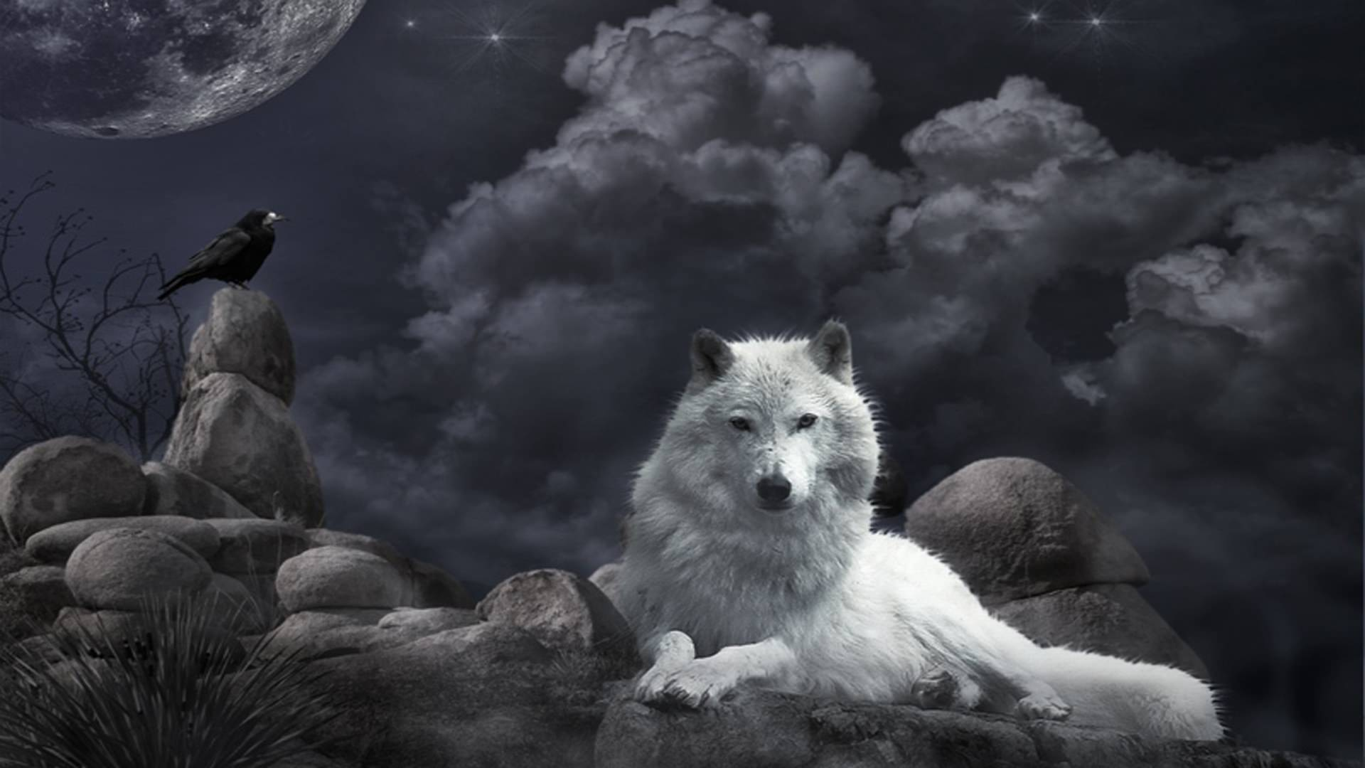 White Wolf Beautiful Image