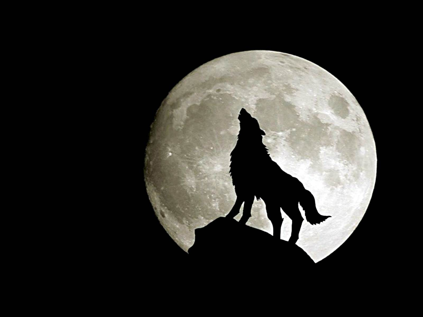 Wolf Howling in Moon Light Nice Art Background