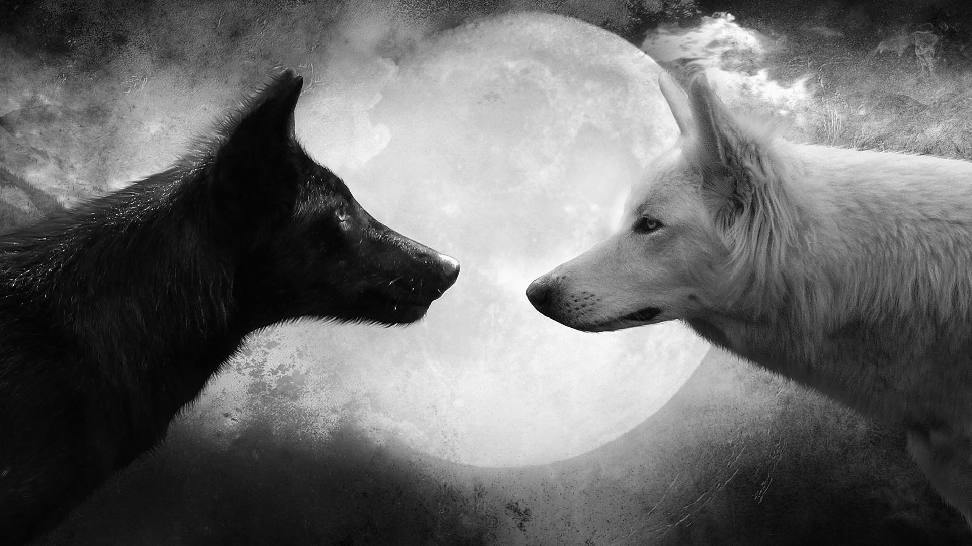 Fighting Between Wolfs Wallpaper