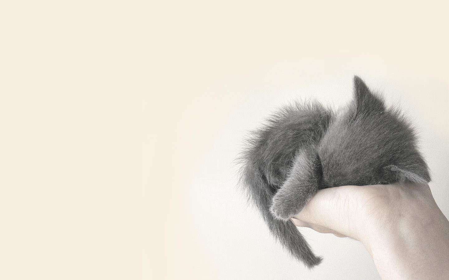 Cute Cat in Hand Beautiful Background