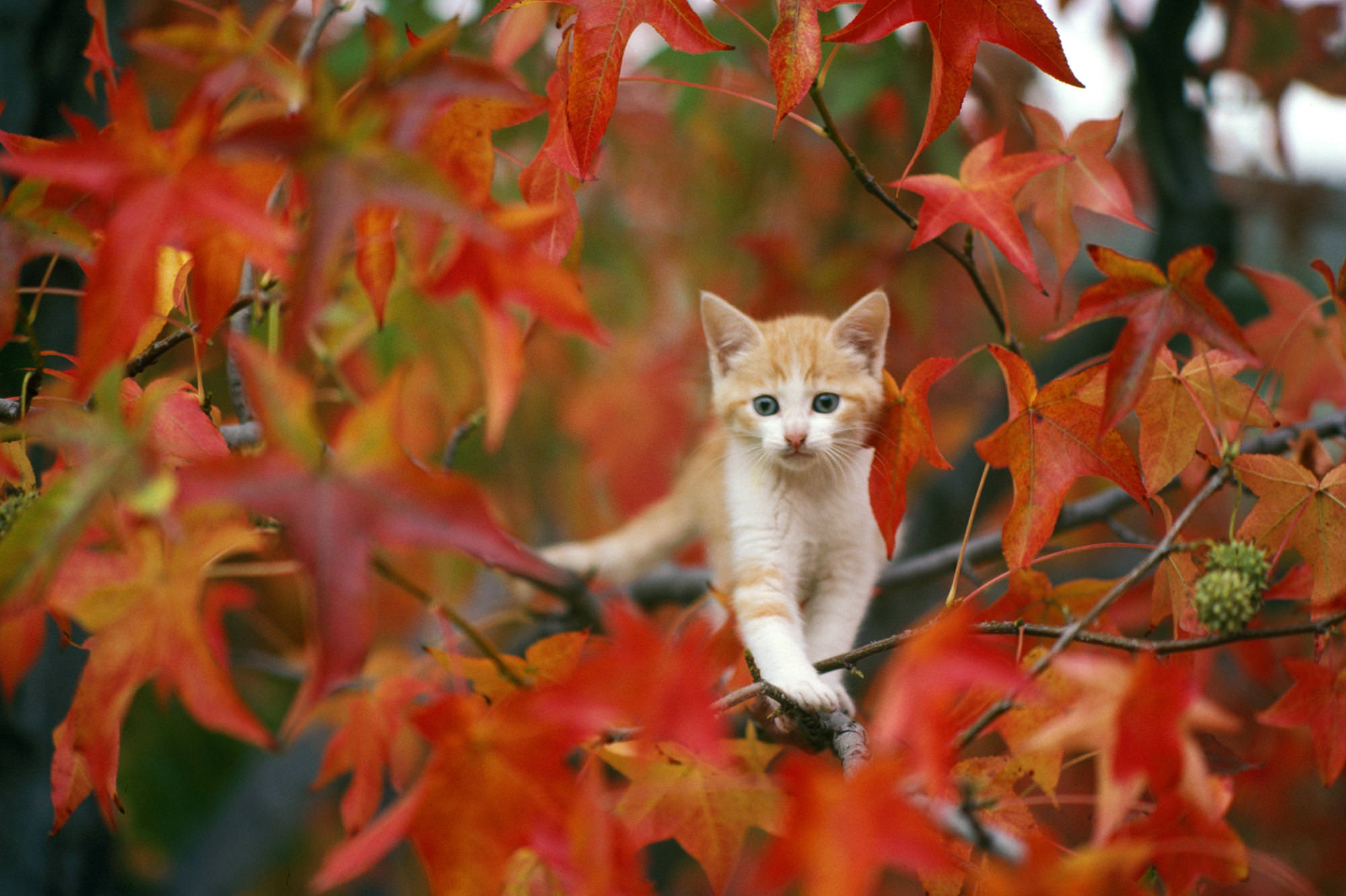 Cute Cat on Tree Branches