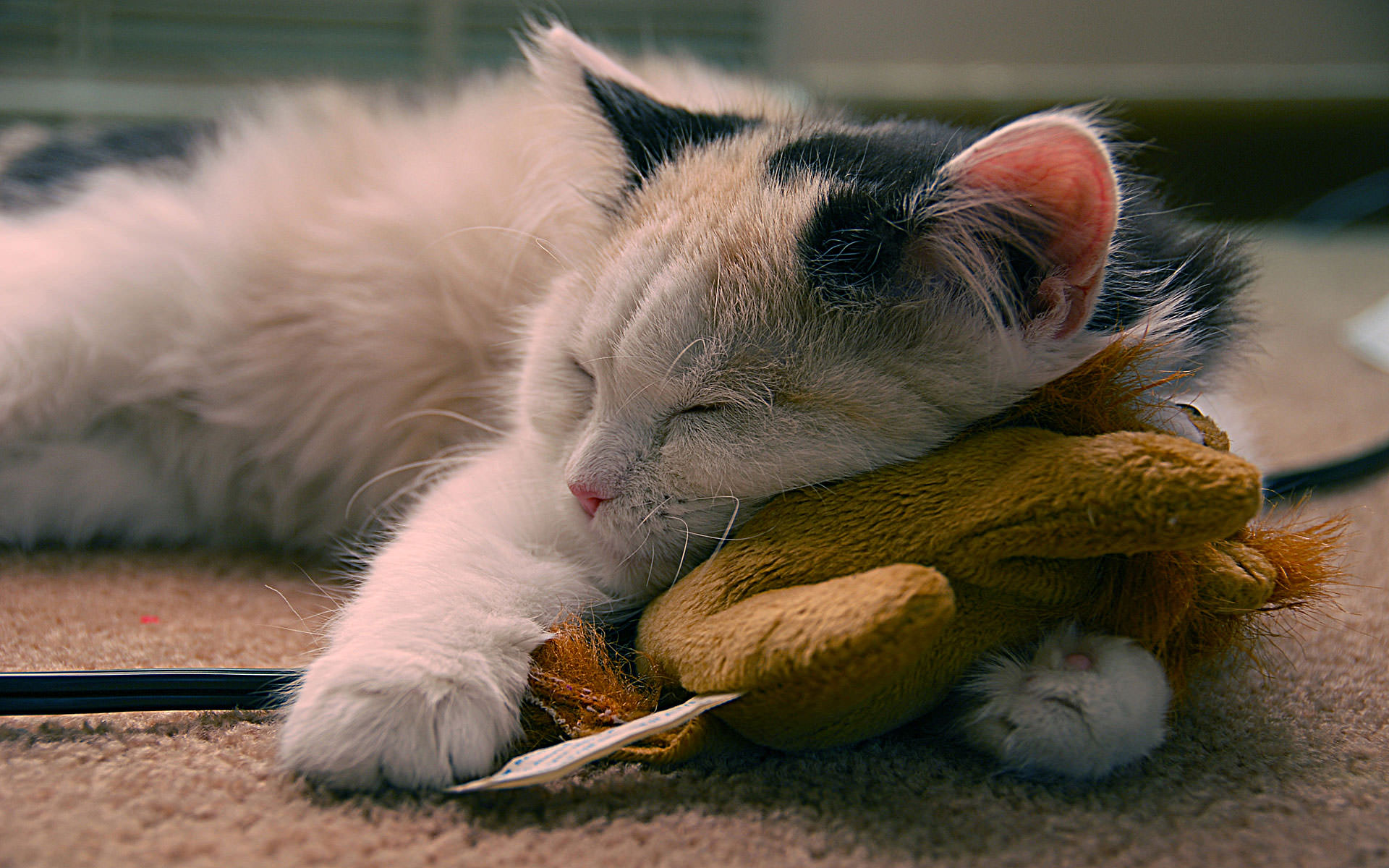 Sleeping Cat with Toe Wallpaper