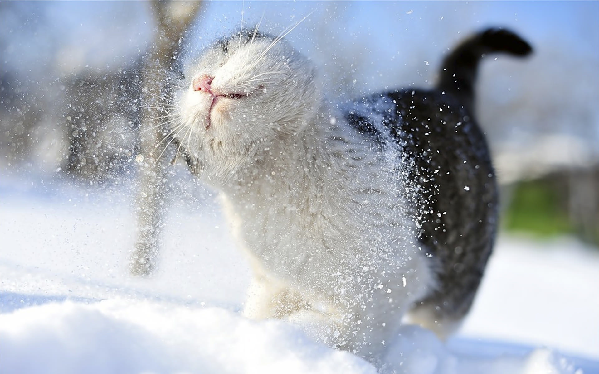 Background of Cat Playing with Snow