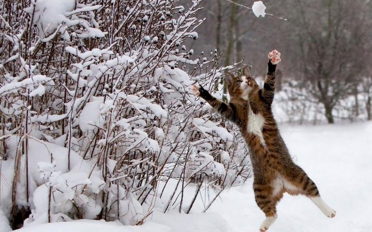 Cute Image of Cat Catching The Ice