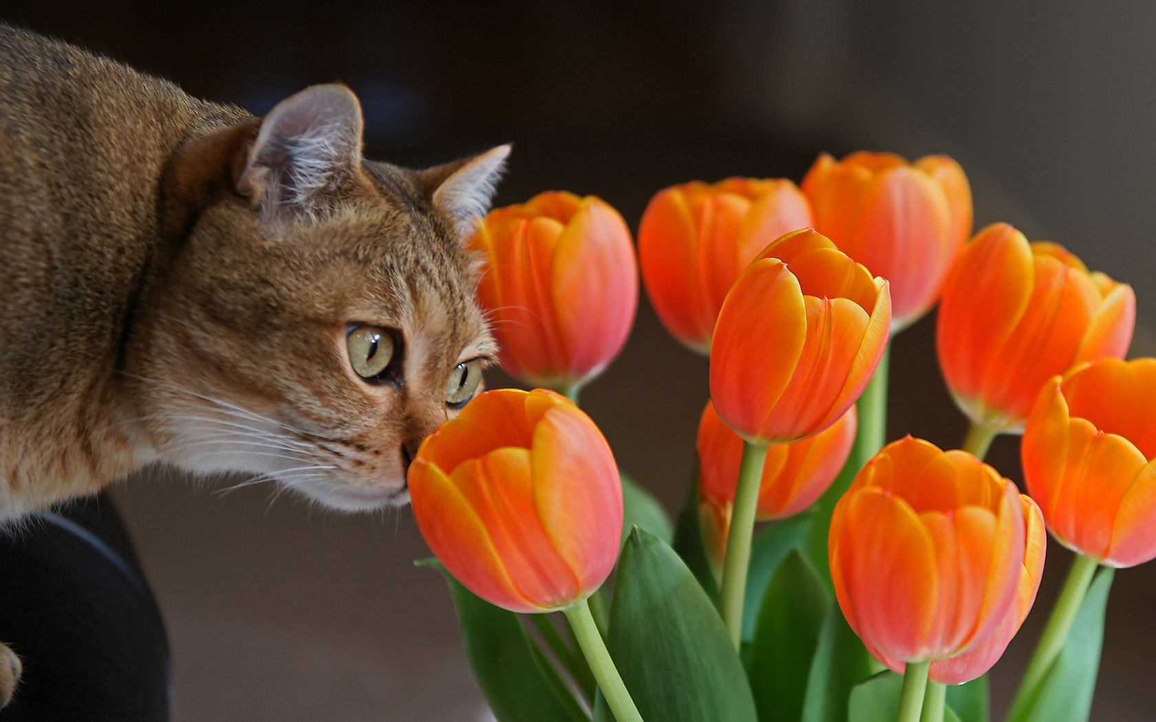 Cat Smelling The Flower Wallpaper