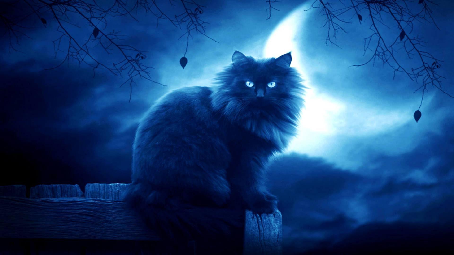 Elegant Look of Cat in Dark Moon Background