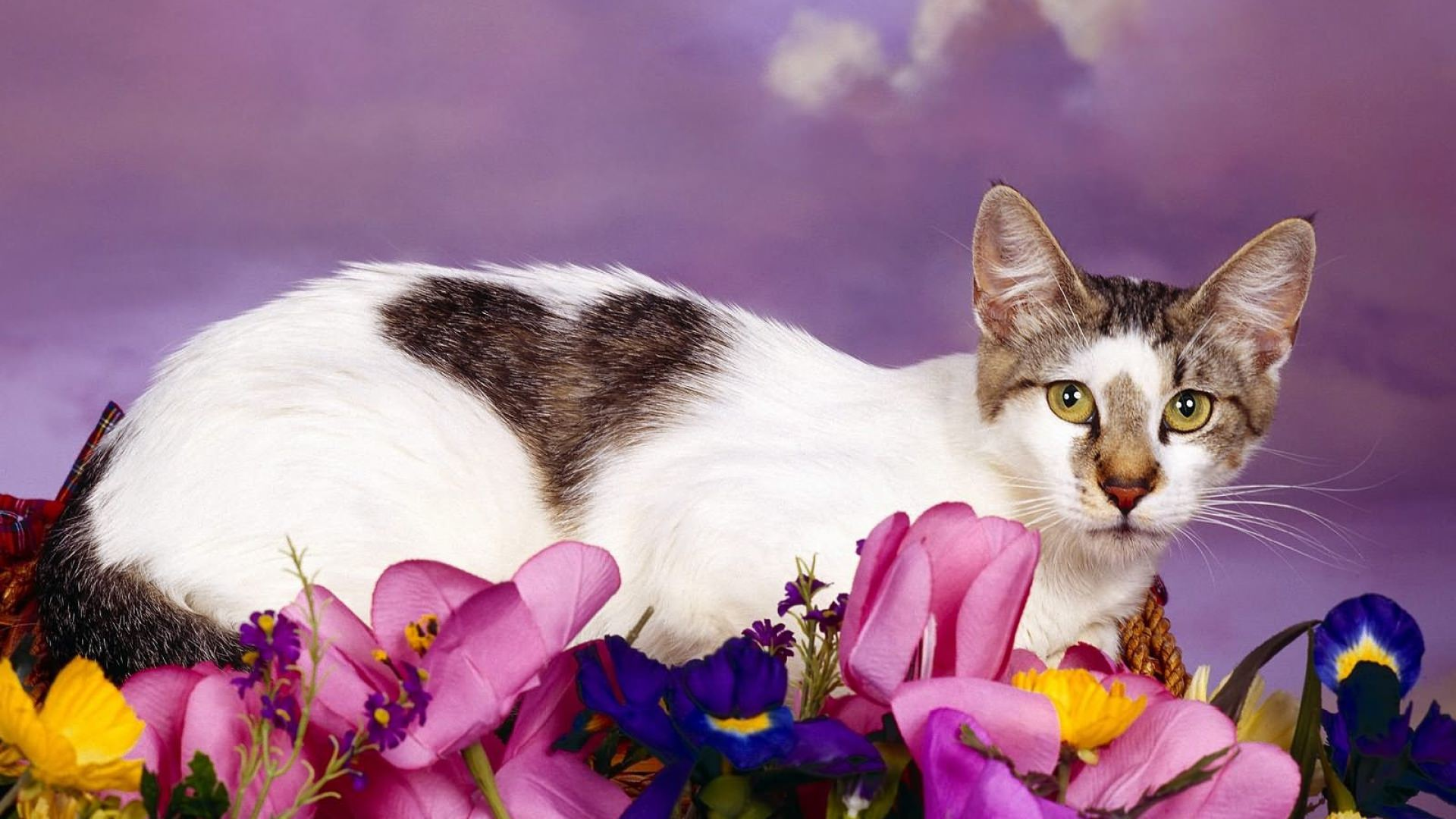 Cat sit on Flowers Background
