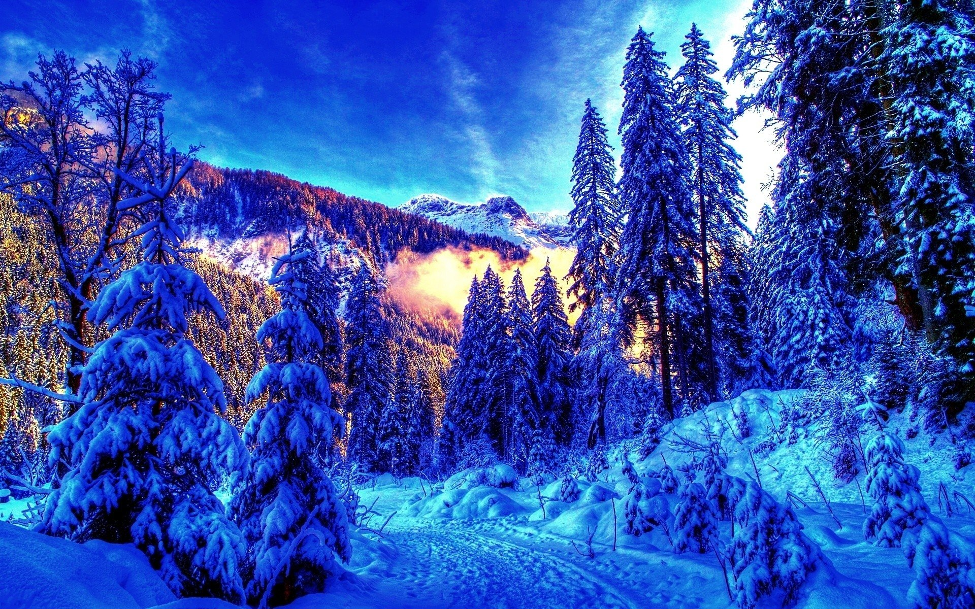 winter landscape bright background