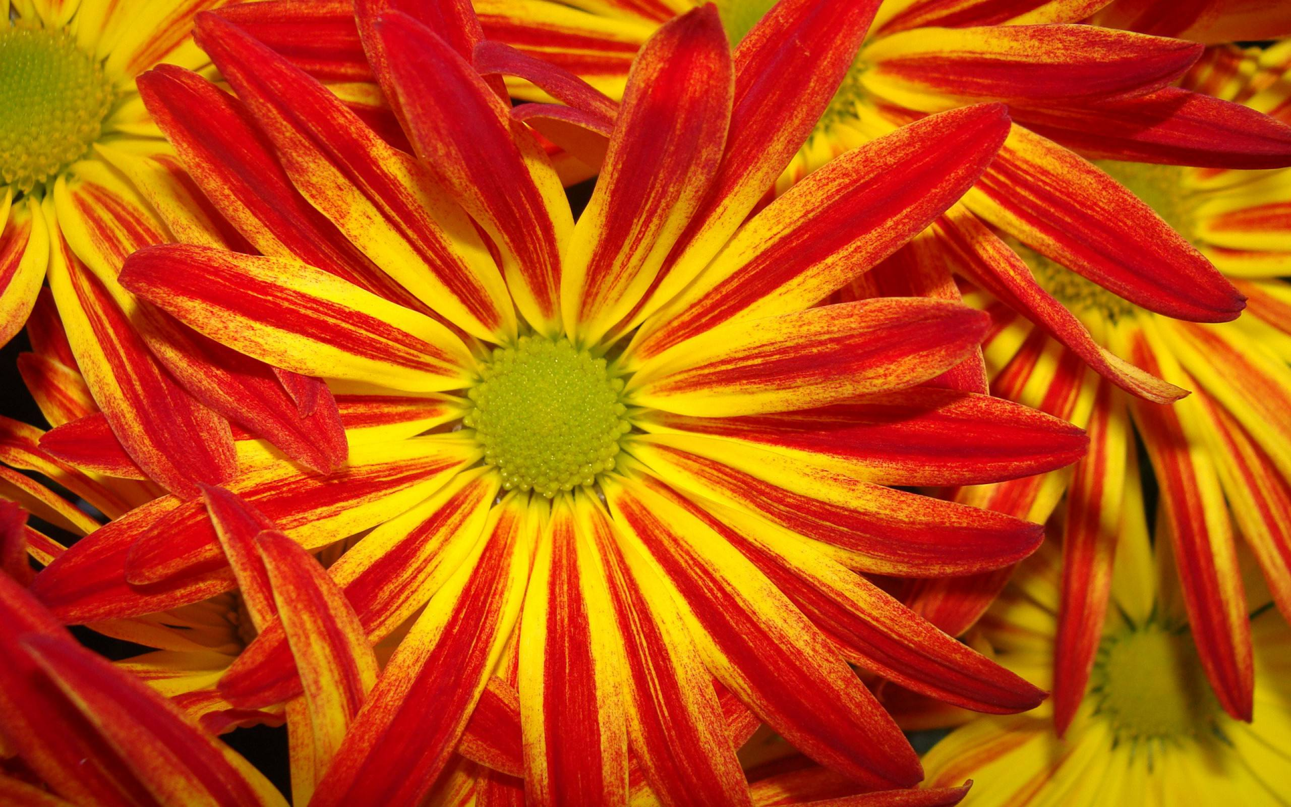 red and yellow bright flowers background