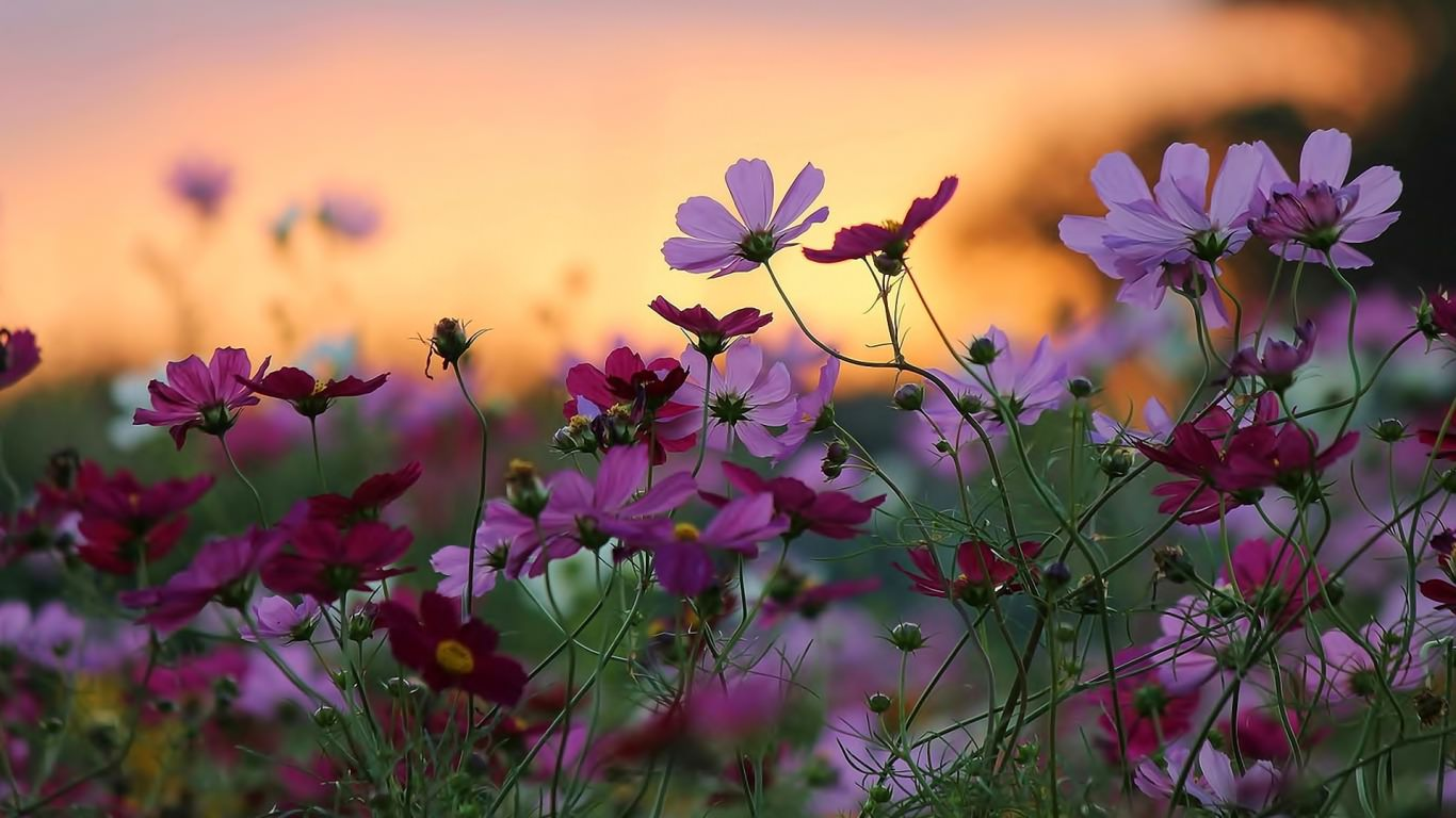 Beautiful Daisy Flowers Background