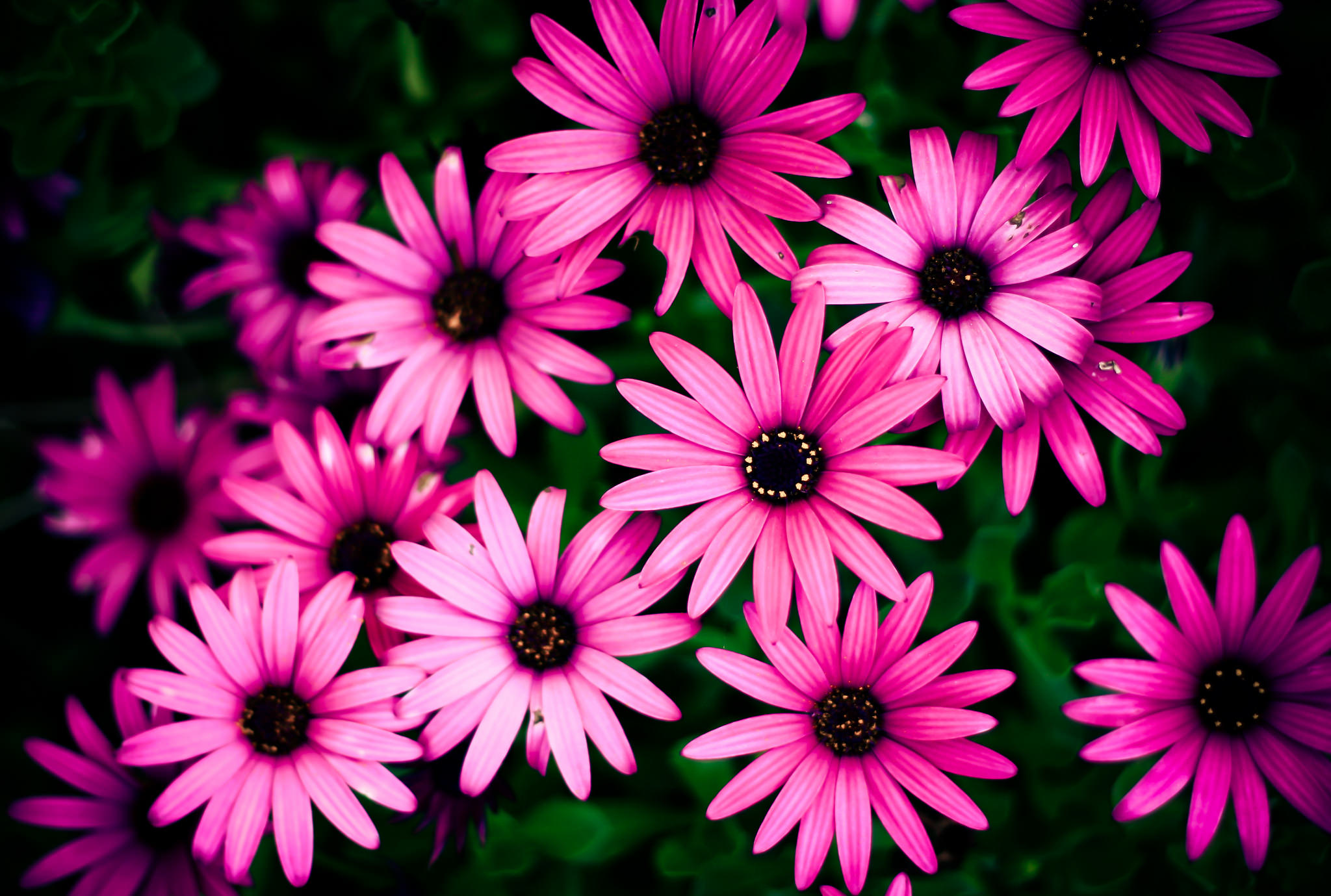 27+ Daisy Backgrounds, Wallpapers, Images, Pictures ...