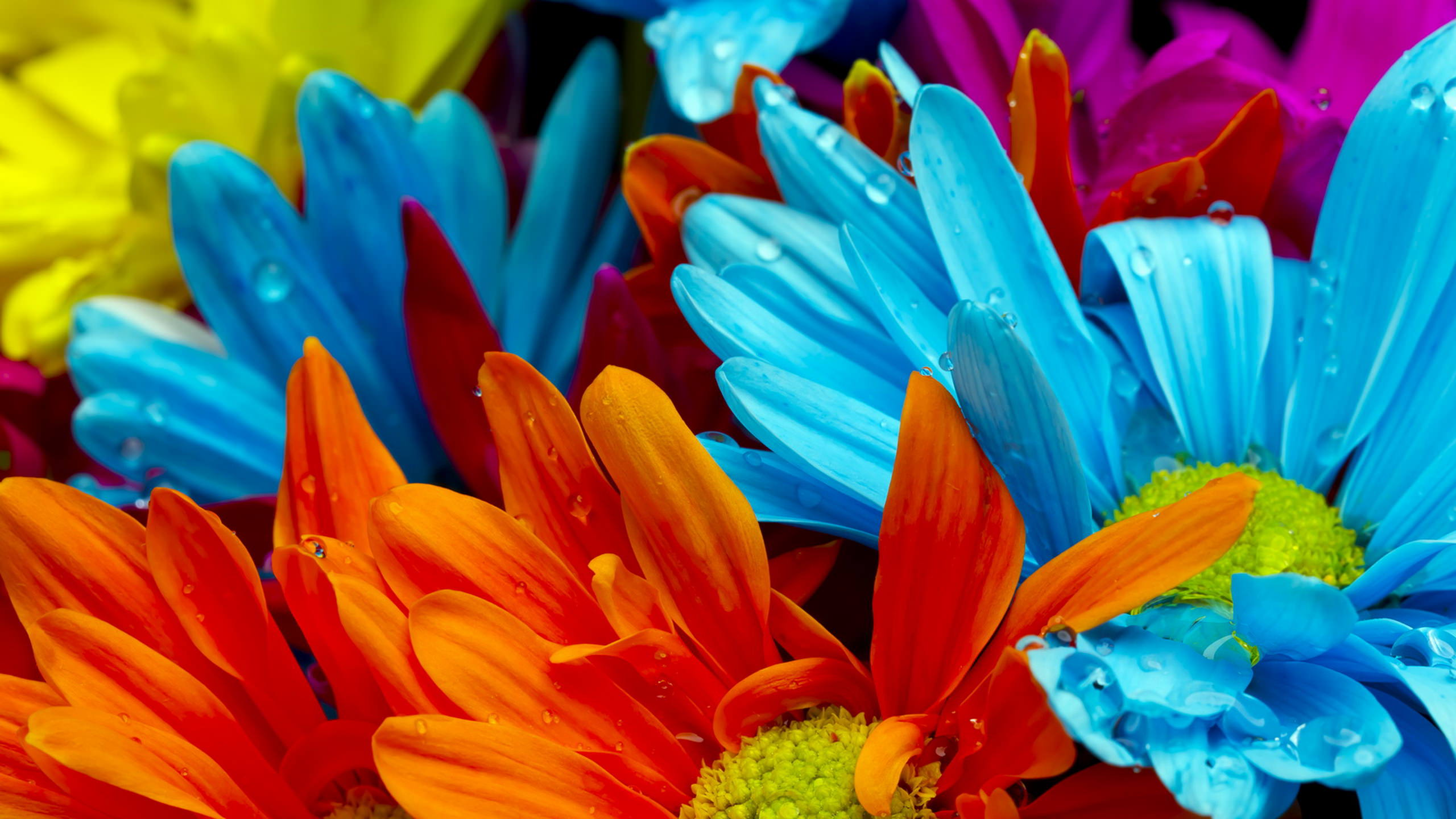 Colorful Daisy Flowers Background