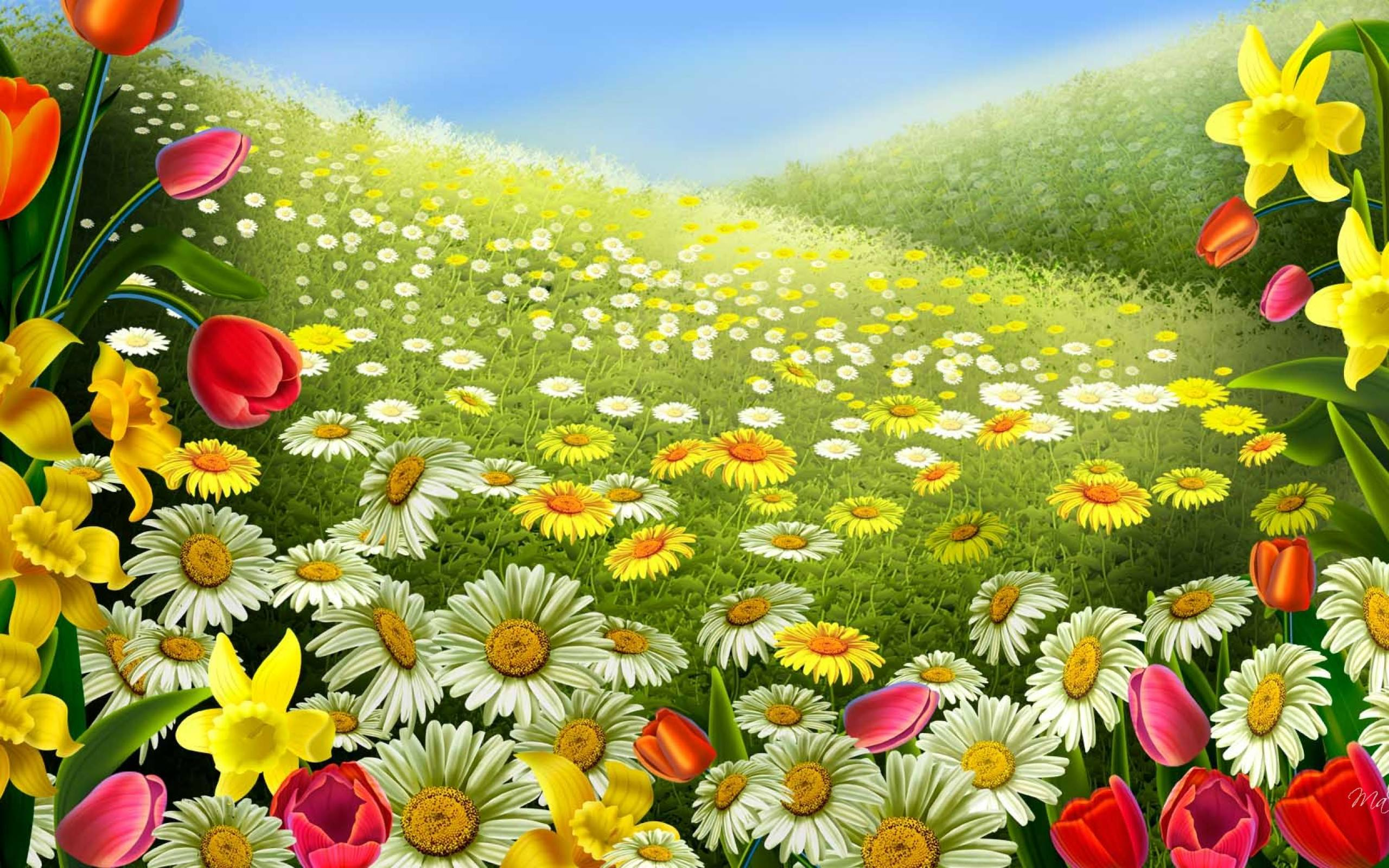 27 daisy backgrounds wallpapers images pictures for Amazing flower gardens