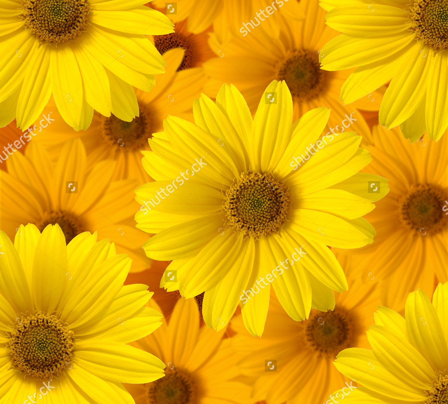 Yellow Daisy Pretty Background